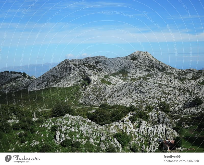 Rocky Mountain in the Peaks of Europe Hiking Environment Nature Landscape Summer Flower Forest Alps Gray Adventure panoramic State Park Vantage point Itinerary