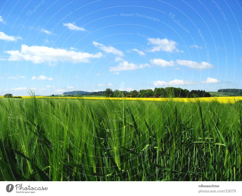 Sky White Green Blue Clouds Yellow Field Grain Canola Delicate Rye Coarse hair Weserbergland