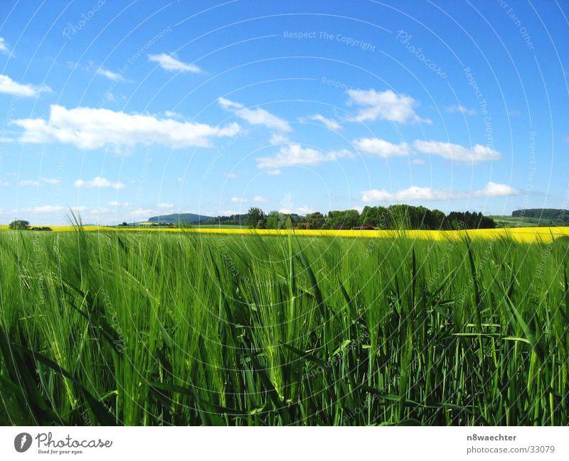 Sky White Green Blue Clouds Yellow Field Grain Canola Delicate Rye Coarse hair Weserbergland