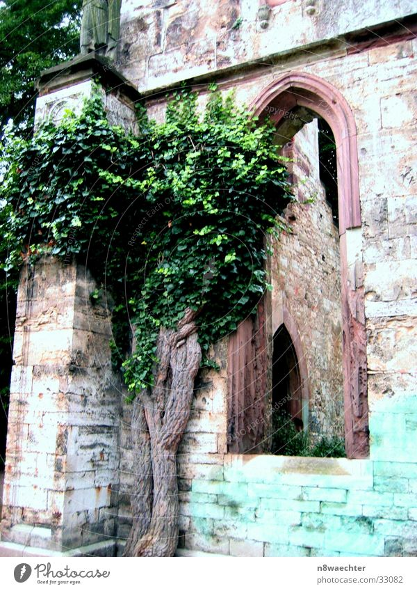 Old Green Tree Window Architecture Wall (barrier) Building Derelict Historic Ruin Section of image Window arch Weimar Stone wall Stone wall Historic Buildings