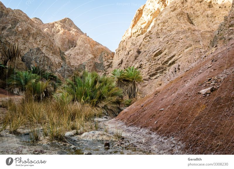 mountain landscape with palm trees in the desert of Egypt Relaxation Vacation & Travel Tourism Summer Mountain Nature Landscape Plant Sky Clouds Tree Grass
