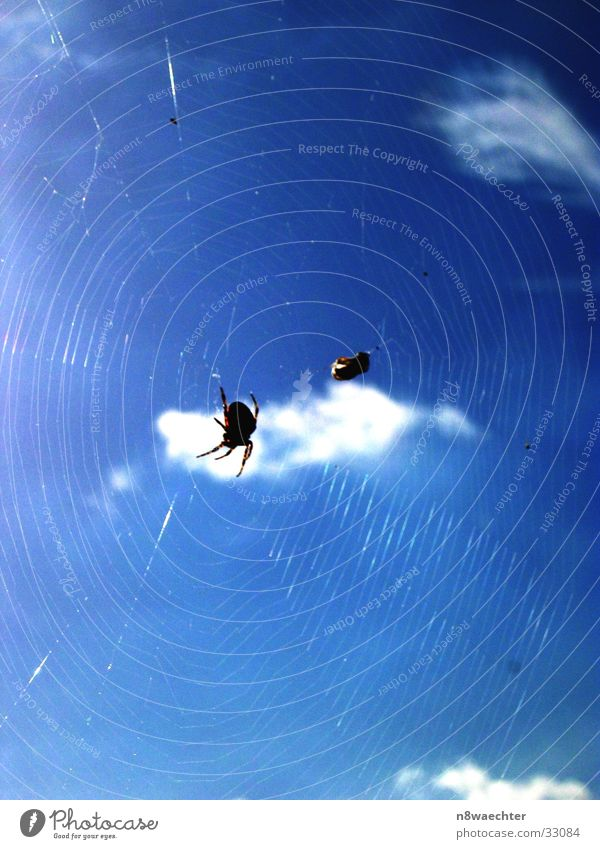 Going online Spider Cloth Spider's web White Transport Fly Sky Blue Sun Reflection