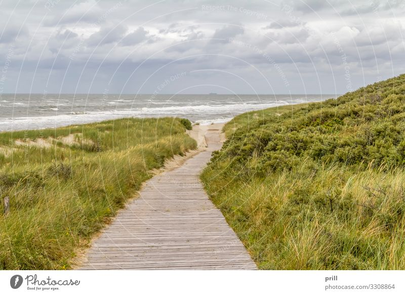 beach scenery at Spiekeroog Summer Beach Ocean Island Landscape Sand Water Coast North Sea Lanes & trails Authentic sand dune Dune East Frisland