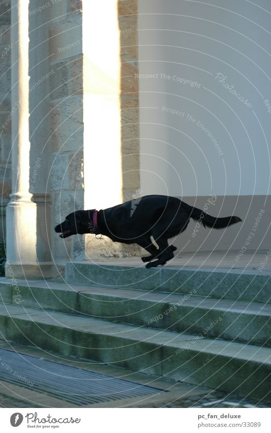 Dog Stairs Running Running sports Hundred-metre sprint Cheetah