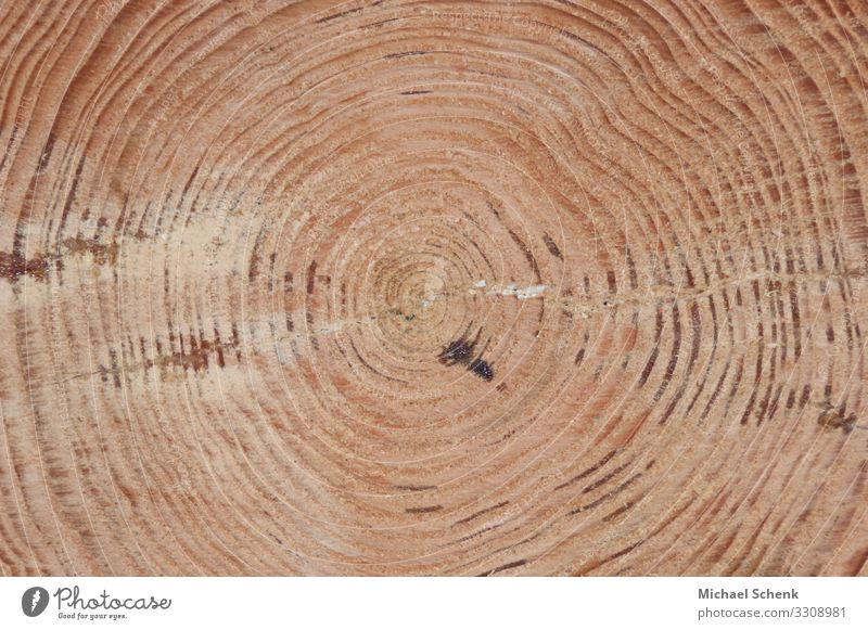 Tree trunk with its annual rings Agriculture Forestry Saw Axe Nature Landscape Wood Brown Power Rachis Life Rings Colour photo Exterior shot Long shot