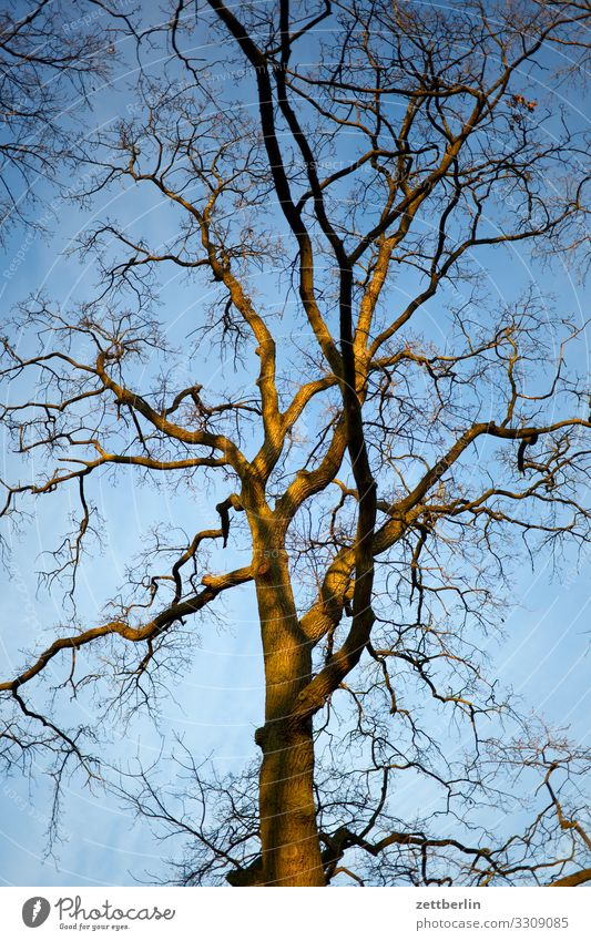Sky Nature Heaven Plant Tree Calm Winter Background picture Autumn Copy Space Branch Tree trunk Twig Treetop Bleak Branched
