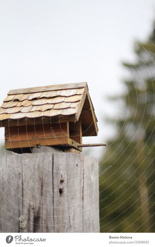 Black Forest house for birds Nutrition House (Residential Structure) Nature Landscape Weather Field Manmade structures Aviation Bird Discover Relaxation Eating