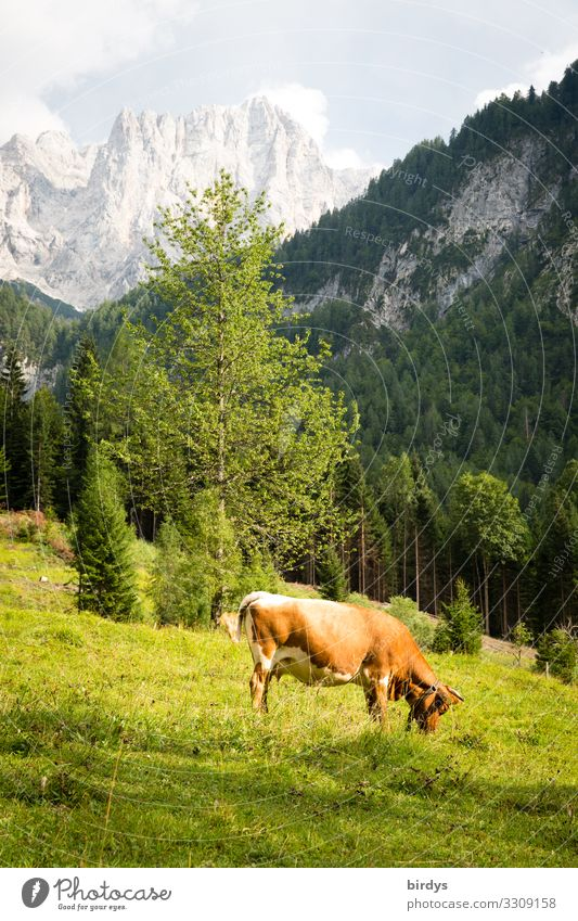 Alpine idyll in Slovenia Vacation & Travel Summer vacation Hiking Agriculture Forestry Nature Sky Clouds Sunlight Beautiful weather Tree Meadow Mountain Peak