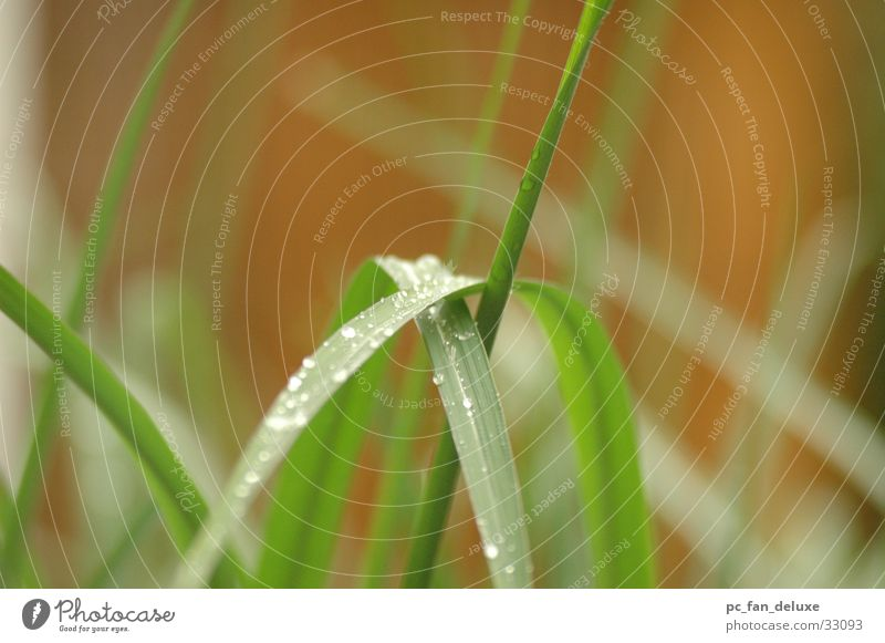 Reed in the rain Common Reed Green Rain Detail Drops of water Rope