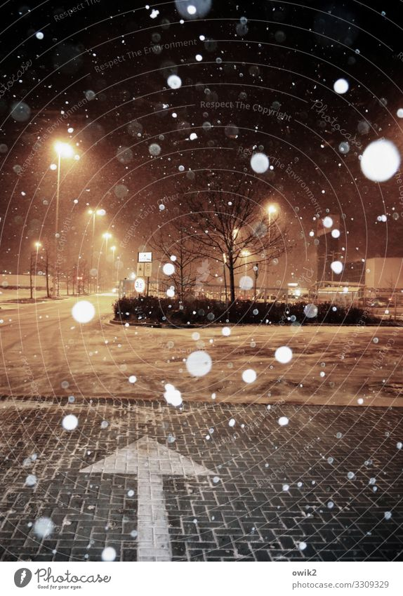 Snowballing Night sky Winter Snowfall Tree Bushes Poland Parking lot Parking lot lighting Street Arrow To fall Illuminate Dark Snowflake Supermarket