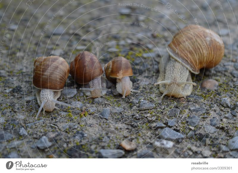 Snail race on slime layer | skin thing Contentment Calm Sporting event Family & Relations Animal Wild animal 4 Group of animals Slimy Brown Gray Spring fever