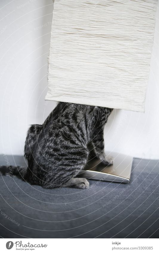Hide and seek for beginners Pet Cat 1 Animal Baby animal Standard lamp Lampshade Crouch Authentic Funny Tiger skin pattern Within Misplaced Absurdity