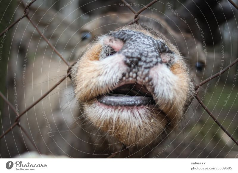 not so greedy Animal Animal face Mammal Deer Red deer Head Snout Muzzle Nostril 1 Exceptional Curiosity Effort Avaricious Funny Colour photo Exterior shot