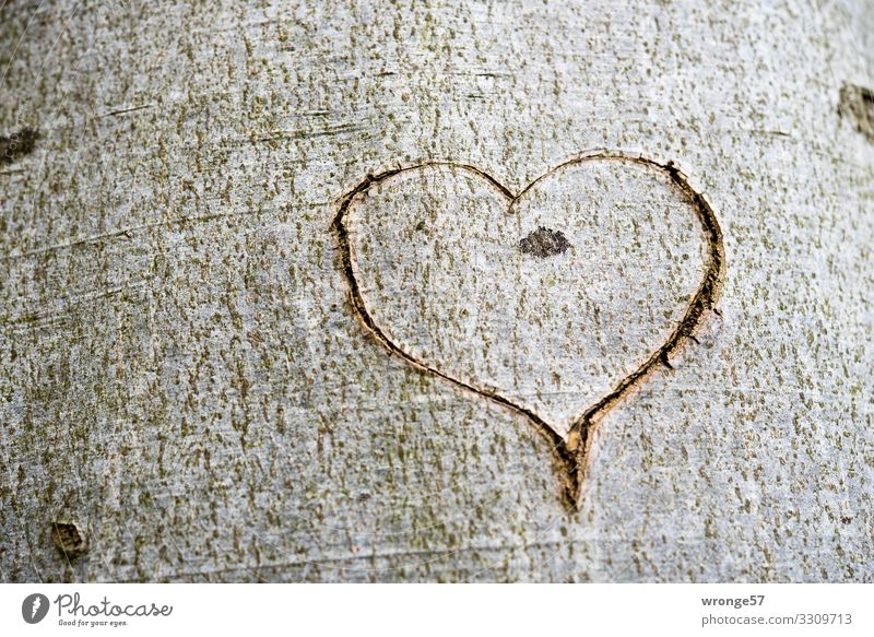A heart cut into the bark of a tree Tree Wood Sign Happy Joie de vivre (Vitality) Spring fever Enthusiasm Love Heart Heart-shaped Tree trunk Tree bark