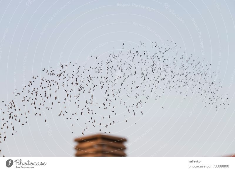 Birds flying in migration over a chimney Sun Factory Industry Environment Nature Landscape Animal Sky Skyline Building Chimney Wild animal Flying Dirty Retro