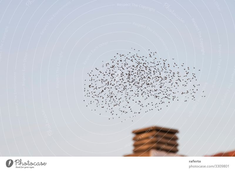 Birds flying in migration over a chimney Sun Factory Industry Environment Nature Landscape Animal Sky Skyline Building Chimney Flying Dirty Retro Brown End
