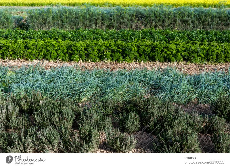 herbs Nature Herbs and spices Field Agriculture Organic farming Row Stripe Growth Many Arrangement Colour photo Exterior shot Deserted Day
