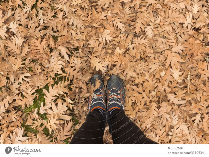 Human feet stepping on dry autumn leaves Beautiful Garden Feet Nature Plant Autumn Tree Leaf Park Forest Footwear Bright Natural Soft Brown Yellow Gold Red