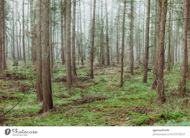in the wood Environment Nature Landscape Animal Autumn Winter Plant Tree Moss Foliage plant Wild plant Forest Virgin forest Growth Old Large Tall Happy