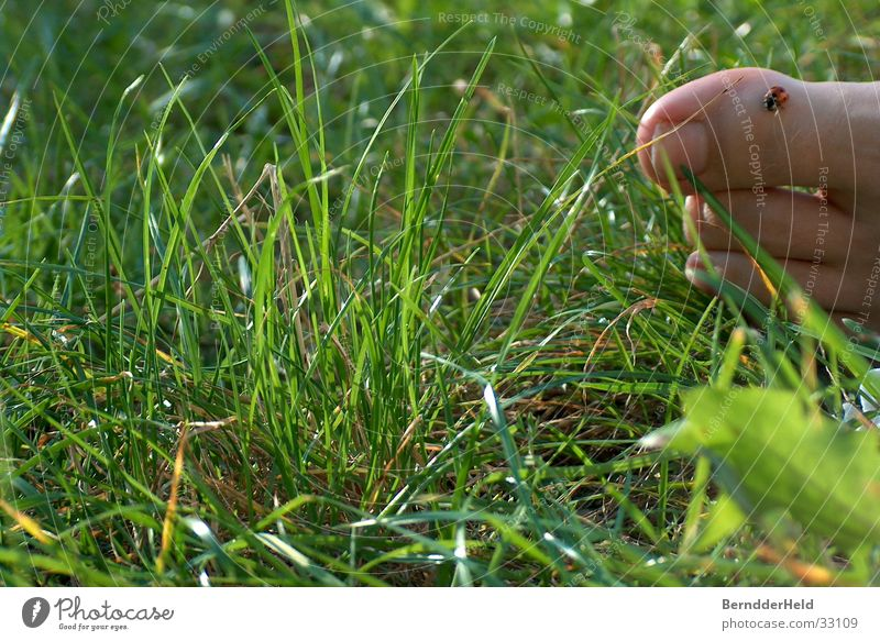 Foot in grass with beetle Grass Ladybird Toes Leaf Crawl Feet Nature Barefoot