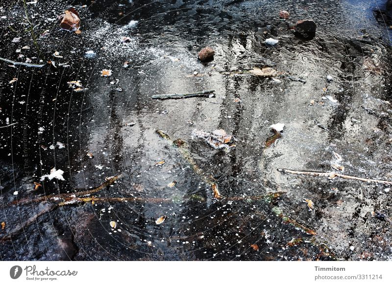 Ice Age | Forest Puddle Environment Nature Elements Water Winter Frost Glittering Cold Natural Blue Black White Emotions Ice age Frozen Colour photo