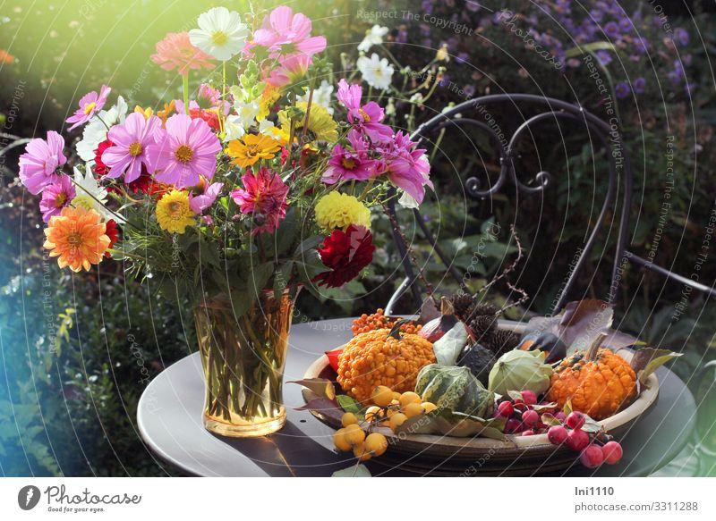 Autumn bouquet in glass vase Plant Beautiful weather Flower Bowl Bouquet Multicoloured Glass Vase Pumpkin Decoration Iron Table Chair Autumnal colours