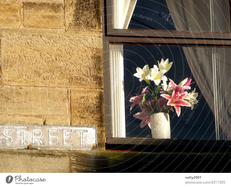 streetart... Living or residing Flat (apartment) House (Residential Structure) Decoration Flower Lily Wall (barrier) Wall (building) Facade Window Characters