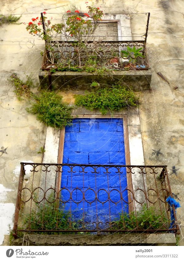 walled in blue... Plant Flower Rose Portugal House (Residential Structure) Wall (barrier) Wall (building) Facade Balcony Exceptional Blue Bizarre Loneliness