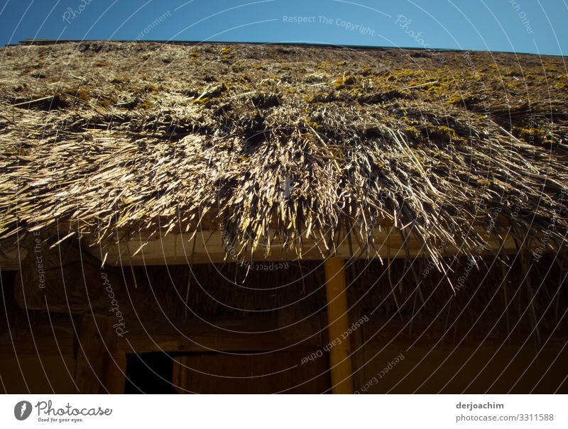 The hut is roofed with straw. A blue sky in the background. Design Trip Summer Dream house Environment Beautiful weather Thatched roof Beach Erlangen Bavaria