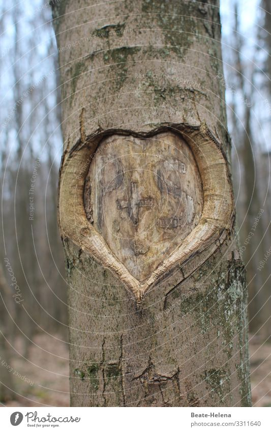 United forever: heart with initials P+S in tree bark Love Tree bark Heart scribe Exterior shot Nature Brown Sign Tree trunk Infatuation Forest Eternity