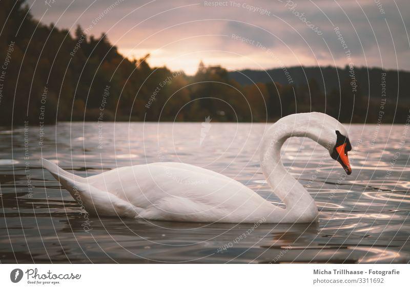 Sky Nature Blue Water White Landscape Sun Clouds Animal Lake Orange Bird Swimming & Bathing Moody Head Wild animal