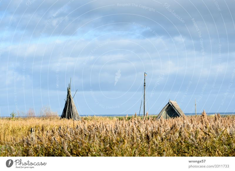 Bodden landscape near Althagen on the Darß with reeds, boathouse, ship masts, wooden poles and seagull Bodden landscape Mecklenburg-Western Pomerania