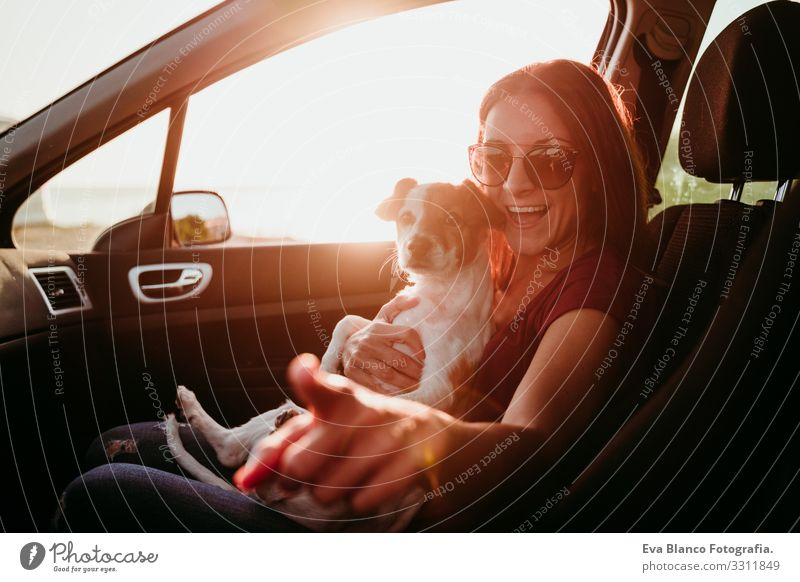 happy young woman and her cute jack russell dog in a car at sunset. travel concept Woman Dog Car Sunset Love Together Jack Russell terrier Cute Small Delightful