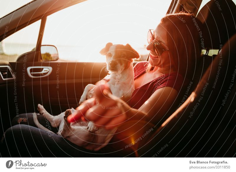 young woman and her cute jack russell dog in a car at sunset. travel concept Woman Dog Car Sunset Love Together Jack Russell terrier Cute Small Delightful