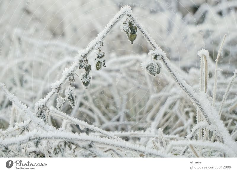 Nature White Leaf Calm Winter Meadow Grass Design Contentment Ice Power Transience Climate Hope Frost Network