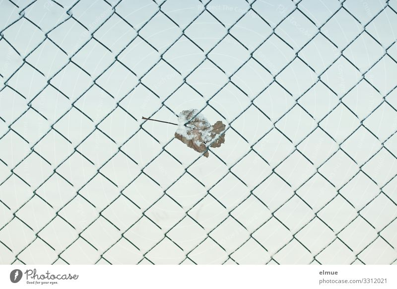 Leaf Winter Funny Design Metal Ice Creativity Adventure Climate To hold on Frost Network Fence End Distress Autumn leaves