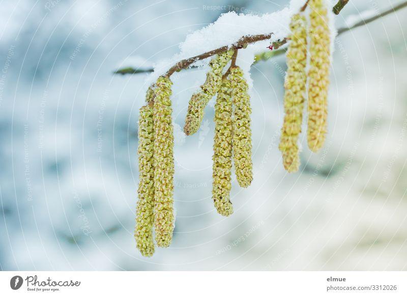 Nature Plant Tree Winter Environment Blossom Spring Cold Snow Happy Joie de vivre (Vitality) Beginning Change Curiosity Hope Longing