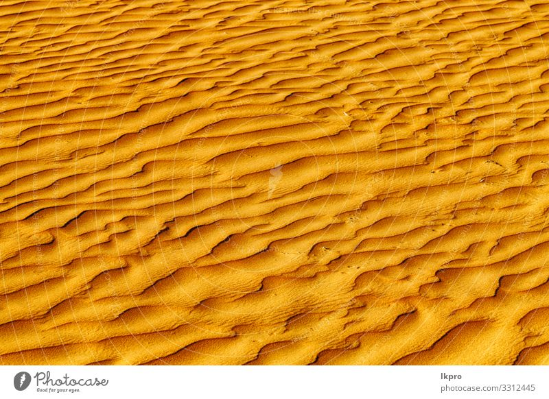 in oman the old desert and the empty quarter abstract Design Summer Beach Ocean Environment Nature Earth Sand Climate Weather Drought Coast Hot Brown Yellow