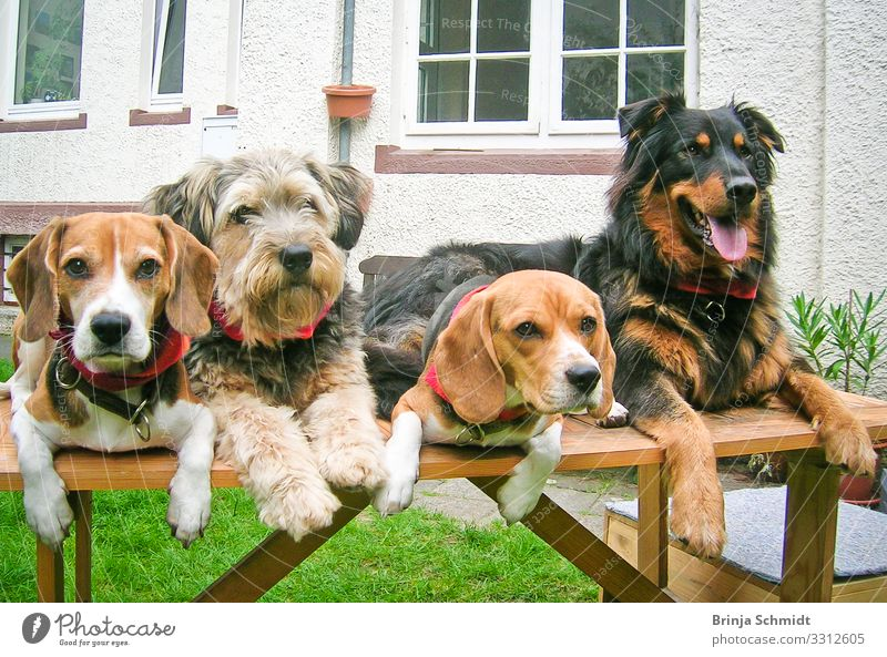 Four different dogs lie well-behaved on a table Joy Leisure and hobbies Playing Garden Pet Dog Animal face 4 Group of animals Touch Lie Looking Dream Wait