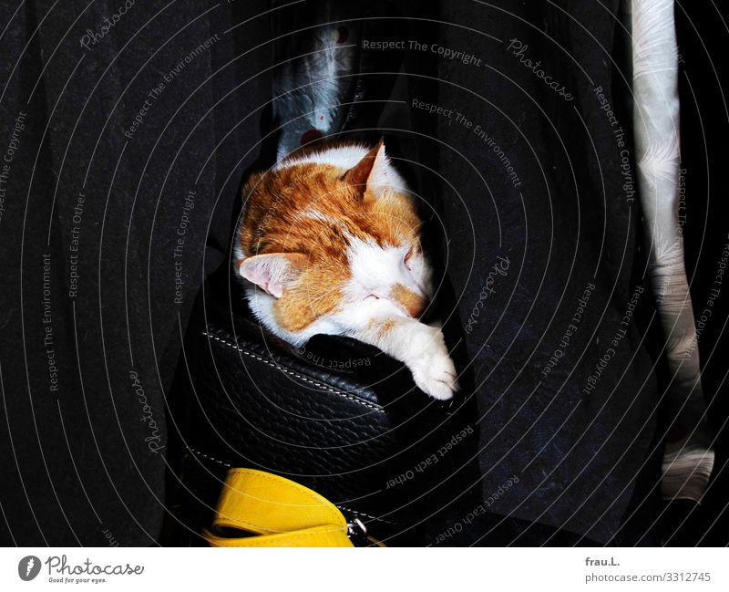 Cat Animal Friendship Living or residing Dream Sleep Domestic cat Pet Safety (feeling of) Cozy Coat Bag Bedroom Cupboard Love of animals Handbag