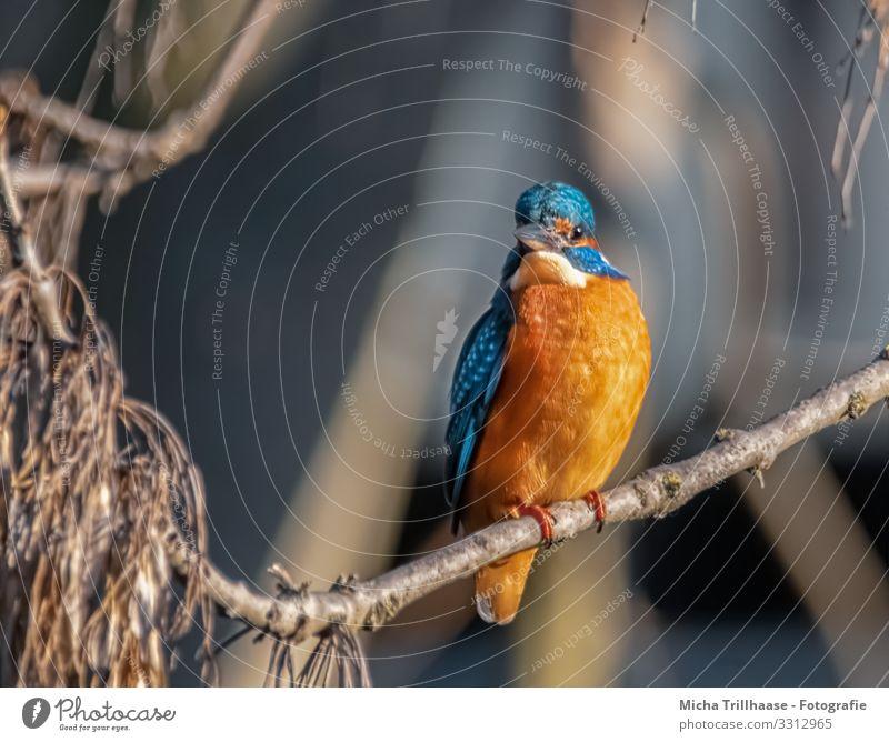 Nature Blue Sun Animal Yellow Environment Eyes Orange Bird Head Illuminate Glittering Wild animal Feather Beautiful weather Wing