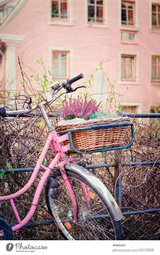 Town House (Residential Structure) Joy Lifestyle Wall (building) Building Wall (barrier) Facade Pink Decoration Bicycle Happiness Cycling Hip & trendy