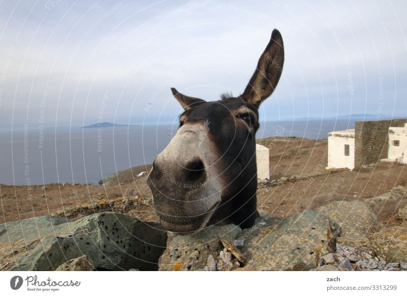 Sky Summer Ocean Animal Joy Funny Island Happiness Hill Mediterranean sea Animal face Greece Farm animal Donkey Aegean Sea Cyclades