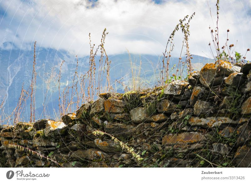 Overgrown stone wall in the mountains Vacation & Travel Summer Mountain Hiking Nature Landscape Clouds Plant Bushes Caucasus Mountains Swaintia Georgia