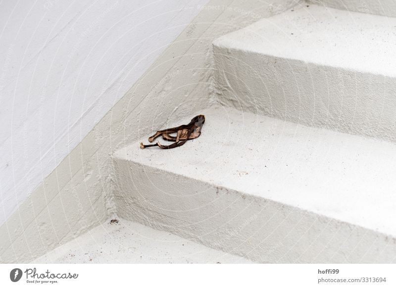 old banana skin on white stairs Building Wall (barrier) Wall (building) Stairs Facade Stone Threat Disgust Hideous Broken Responsibility Horror Distress