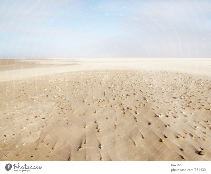 Traces in the sand Harmonious Relaxation Calm Meditation Far-off places Beach Ocean Island Elements Sand Water Sky Clouds Spring Wind Coast North Sea Tracks