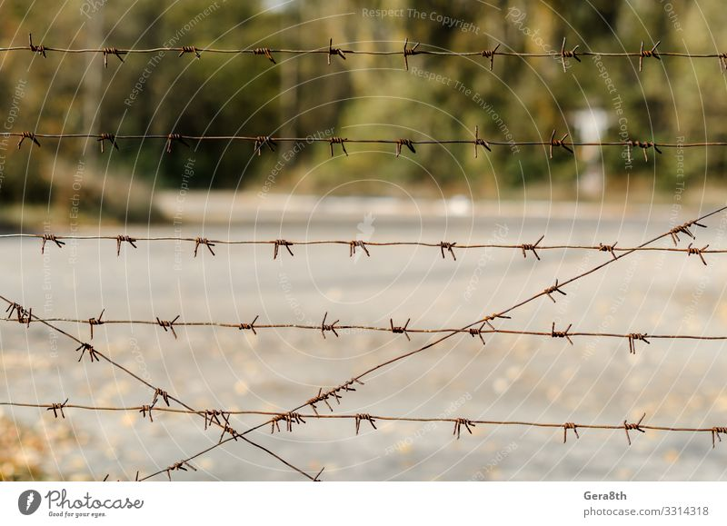 barbed wire fence in Chernobyl Ukraine Vacation & Travel Tourism Trip Plant Autumn Tree Street Threat Gray Green Dangerous Environmental pollution Pripyat