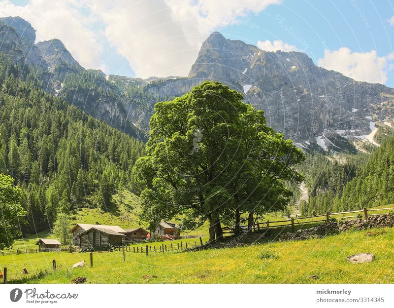 Summer tree in the valley Healthy Health care Wellness Life Harmonious Relaxation Calm Cure Spa Vacation & Travel Tourism Trip Adventure Freedom Cycling tour