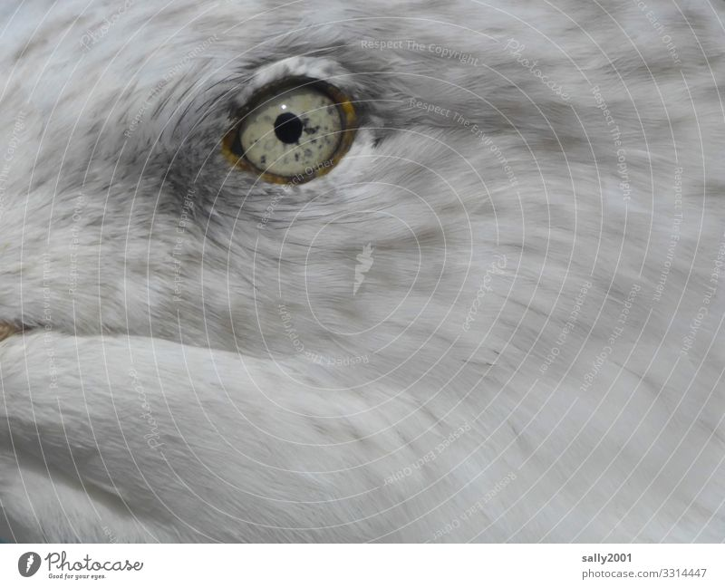 an instant... Animal Bird Animal face Eyes Seagull 1 Baby animal Observe Beautiful Uniqueness Curiosity Gray White Surveillance Pupil Iris Feather moment