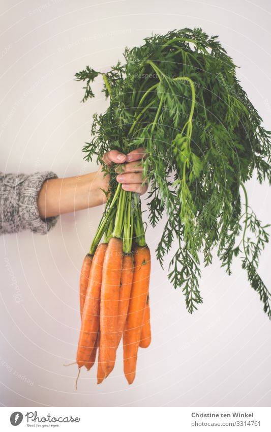 The hand of a young woman holds a bunch of carrots Food Vegetable Carrot Nutrition Organic produce Vegetarian diet Diet Vegan diet Young woman